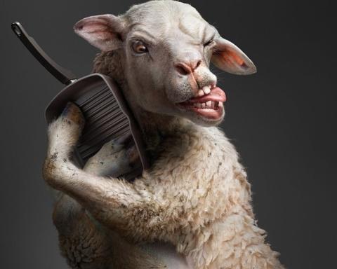 овца, баранина