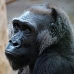 Прага Зоопарк Коренной житель